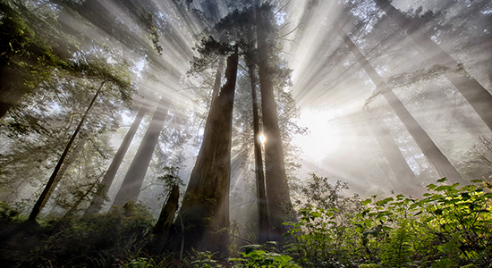 Hope—Redwood National Forest, California
