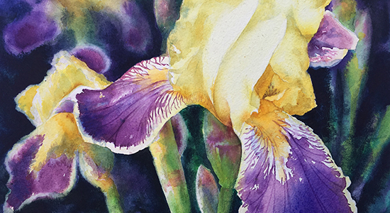 Heritage Irises at Filoli Gardens