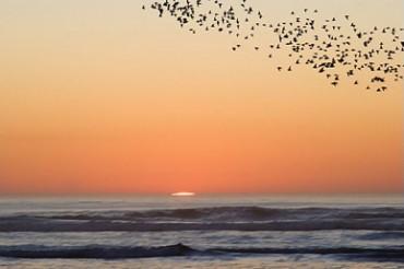 Flying Birds Sunset